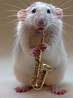I thought I wanted a dog but an instrument playing rodent would be pretty sweet.
