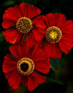 Walk blamelessly and do...justice. Think the truth in heart & (slander) not with tongue. Zinnias