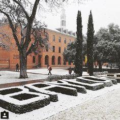 Winter wonderland at Baylor University University Dorms, Best University, Dream Collage, College Campus, College Life, Waco Texas, Memorial Hospital, Education College, Finals Week