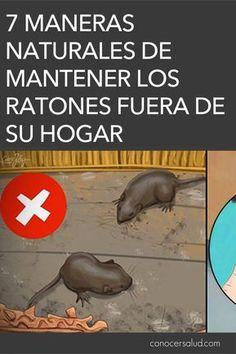 Remedio natural e infalible para eliminar las ratas y los - Como matar ratones ...