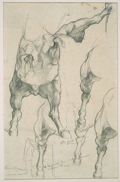 Cave to Canvas, Henri Regnault, Anatomical Studies of a Horse for...