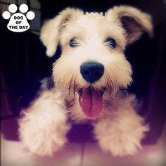 .@dogoftheday (! DOG OF THE DAY) 's Instagram photos | Webstagram - the best Instagram viewer