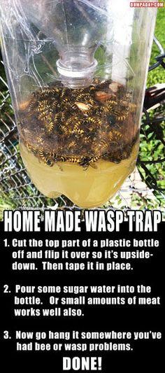 Alternative Gardning: Homemade Wasp Traps