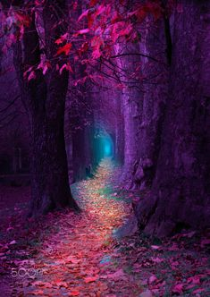 """"""" Fairytale Pathway """" - (Purple-Red) Pathway - this wallpaper will remind you a Fairytale Pathway"""