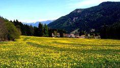 I colori della primavera in Salven