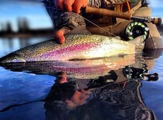 The beauty of fly fishing.