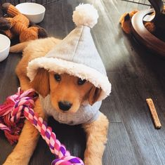 """3,767 Likes, 55 Comments - Oshie Golden Bear (@oshiegoldenbear) on Instagram: """"Dees puppos in hats to cap off your hump day Use #OshiebearAffair to be featured!"""" #goldenretriever"""