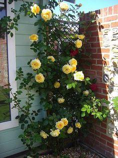 I want this rose! Teasing Georgia
