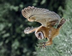 10 Fascinating Facts About Owls: Owls Have Extremely Powerful Talons