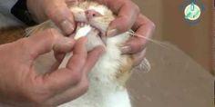 Het poetsen van gebit bij huiskatten is belangrijk om gebitsproblemen en slechte adem te voorkomen. Volg de tandenpoetsinstructies voor huiskatten.