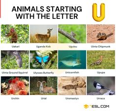 Animals that Start with U Animals Starting With U, Alphabetical List Of Animals, Small Birds, Pet Birds, Ground Squirrel, Visual Dictionary, Earthworms, Australia Living, English Lessons
