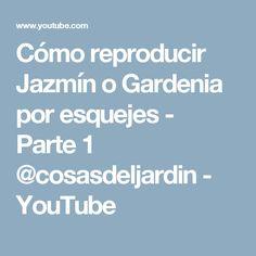 Cómo reproducir Jazmín o Gardenia por esquejes - Parte 1 @cosasdeljardin - YouTube