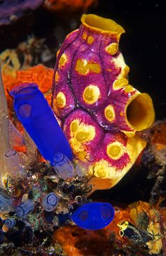 Sea squirt heaven. reminds me of Christmas as a child. the colors,