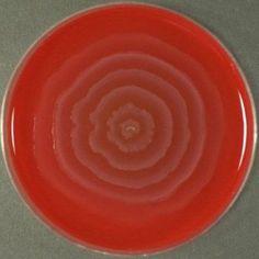 Salmonella from Proteus