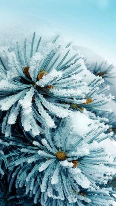 Snow Frozen