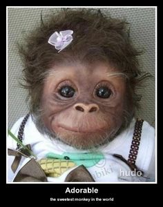 The sweetest monkey baby