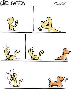 Cães e Gatos – Mistério…