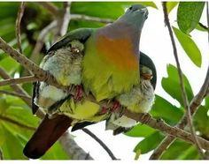 Mãe pássaro com seus filhotes nas asas! Incrível!