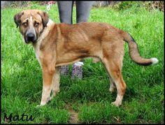 MATU (Enero 2008) Es cariñoso, sociable y bueno. Se lleva bien con otros perros. Ideal para finca.