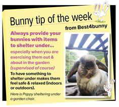 Bunny tip week - 22 Always provide items for your bunnies to shelter under.
