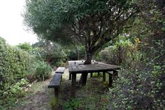 Judy Millar — Artist, Home & Studio, Waitakere, Auckland