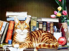Cat and books Wallpaper (1024×768)