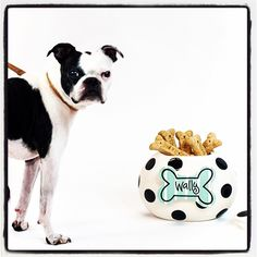 COTON COLORS black & white polka dot cookie jar canister with dog bone attachment    |  Shop @heart2heartTX on instagram #heart2hearttx