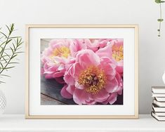 Peony Print, Flower Still Life Photography Print, Floral Wall Art, Botanical Print - Peony Eleven Still Life Photography, Fine Art Photography, Peony Flower, Flowers, Bedroom Storage, Bedroom Wall, Bedroom Decor, Peony Print, Pink Images