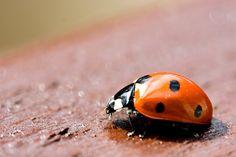 Pretty Ladybugs
