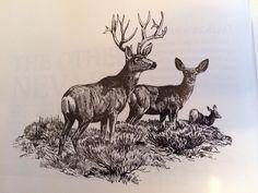 #Deer #Art #Sketch #Sketches #WesternArt #OriginalArt #Artist #Nature #Animals