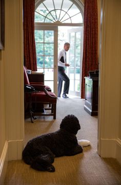 Bo, the Obama family dog, waits to greet President Obama in the Outer Oval Office, June 2013