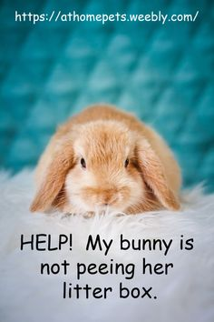Help! My bunny is not peeing in her litter box - AT HOME PETS Baby Bunnies, Bunny, Rabbit Litter Box, Liter Box, All Pictures, First Night, Habitats, Places To Go
