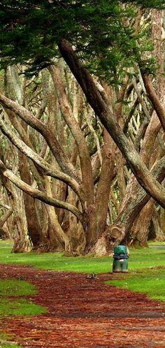 Lovely Tree Hill in Auckland, Albert Park, New Zealand Mais New Zealand North, Auckland New Zealand, New Zealand Travel, Beautiful World, Beautiful Places, Albert Park, Nature Tree, Tree Forest, Roadtrip
