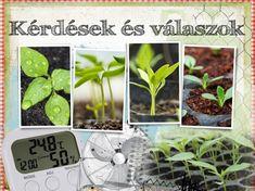 Hogyan-magvetés, palántázás kérdés-válasz - gazigazito.hu Yard, Plants, Patio, Garten, Planters, Courtyards, Court Yard, Plant, Tuin