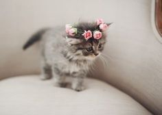 Kitten wearing a flower crown...