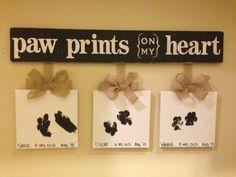 Paw Prints on my Heart: Sadie, Oscar, and Winnie.