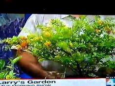 Tropical Color for your garden with Florida Landscape Designer Larry ONeil