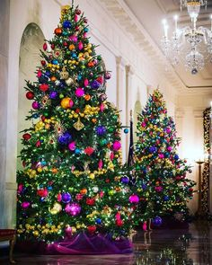 White House Christmas Tour White House Christmas Tour 2015 On either side of the door leading to the Blue Room are two holiday trees strung with garlands of jewel-toned ball ornaments. Beautiful Christmas Trees, Colorful Christmas Tree, Christmas Tree Themes, Noel Christmas, Holiday Tree, Xmas Tree, All Things Christmas, Black Christmas, Christmas Tree Colored Lights