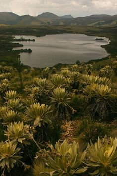 One of the most beautiful lagoons of Cundinamarca, Colombia: La Laguna Verde de Tausa. Ecuador, Wonderful Places, Beautiful Places, Amazing Places, Places Around The World, Around The Worlds, Science And Nature, Beautiful World, Simply Beautiful