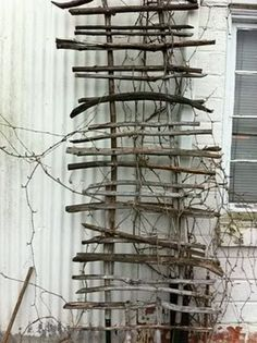 trellis made of branches | Repurpossed stuff / Trellis made from branches off the winters cut