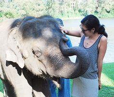 Travel Like an Editor: Andrea Cheng Animals Amazing, Pretty Animals, Animals Beautiful, Photography Workshops, Travel Photography, Miniture Animals, Phuket Thailand, Thailand Travel, Thailand Elephants