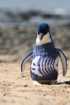 I pinguini hanno bisogno di maglioni, perché? Ce lo spiega Knits for Nature.