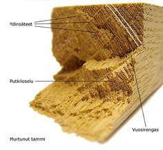 Lujuus - Puun rakenne - PuuProffa