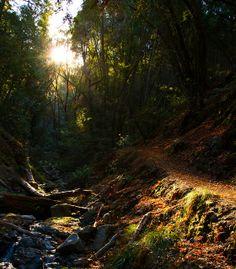 The Light and The Shade  Uvas County Canyon Park, Morgan Hill, CA