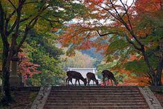 奈良公園:紅葉の彩りに囲まれて…
