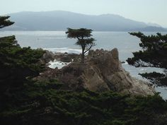 Lone Pine at Pebble Beach