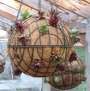 Two hanging baskets put together to make a ball.  Just add the plants!!  Clever.