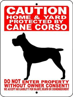 "CANE CORSO Guard Dog - love it! Want it! Wish it wasnt a ""cropped"" dog tho, doesn't look like Hercie!"