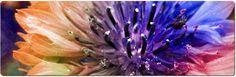 Laser Vaginal Rejuvenation offered at Fusion    www.fusionobgyn.com