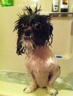 Hacen la hora del baño divertidísima. | 41 Maneras en que tu perro te hace la vida 100% mejor